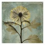 Chrysanthemum Posters by Albert Koetsier