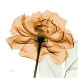 Copper Rose Kunstdrucke von Albert Koetsier