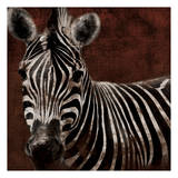 Zebra Posters by Jace Grey