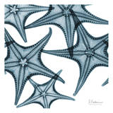Starfishes Prints by Albert Koetsier