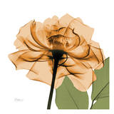 Copper Rose Prints by Albert Koetsier
