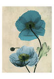 Iceland Poppy Print by Albert Koetsier