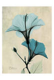 Hibiscus Prints by Albert Koetsier