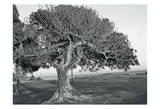 The One Tree BW Posters by Joseph Charity
