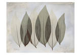 Coculus Leaf Prints by Albert Koetsier