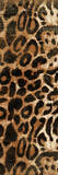 Animal Print 1 Print by Jace Grey
