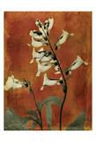 Golden Foxglove Prints by Albert Koetsier