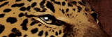 Leopard Eyes Prints by Jace Grey