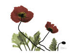 Love Poppies Print by Albert Koetsier