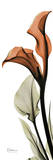 Terracotta Calla Lily Prints by Albert Koetsier