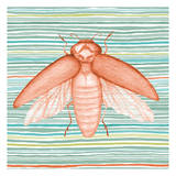 Summer Stripe Beetle 2 Print by Nicole Tamarin