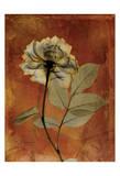 Rose Prints by Albert Koetsier