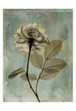 Rose Art by Albert Koetsier