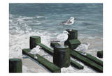 Bradley Beach Sea Gulls Prints by Donna Sinisgalli