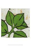 Planta Green III Prints by Andrea Davis