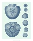 Coastal Curio IV Giclee Print by  Vision Studio