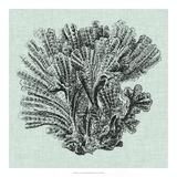 Serene Coral I Giclee Print by  Vision Studio