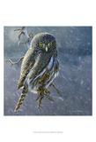 Owl in Winter II Prints by Chris Vest