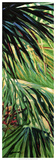 Just Fronds Giclee Print by Suzanne Wilkins