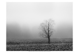 Fog & Tree Prints by Steve Silverman