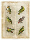 Antiquarian Parrots II Giclee Print by  Vision Studio