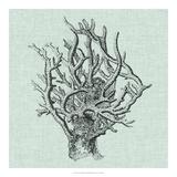 Serene Coral II Giclee Print by  Vision Studio
