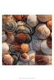 What the Shell Print by Danny Head