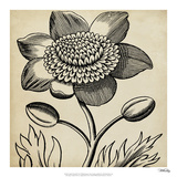 Graphic Floral III Giclee Print by  Vision Studio