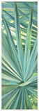 Fan Palm I Giclee Print by Suzanne Wilkins
