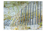 Sea Oats II Prints by Danny Head