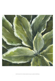 Hosta Detail II Poster by Liz Nichols