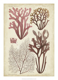 Seaweed Specimen in Coral II Giclee Print by  Vision Studio