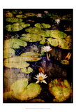 Lily Ponds VIII Print by Robert Mcclintock