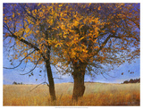 Yellow Elm Giclee Print by Chris Vest