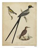 Bonapart Birds III Giclee Print by Charles L. Bonapart