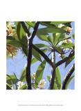 Plumeria Study I Poster by Rick Novak