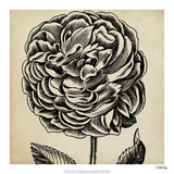 Graphic Floral VII Giclee Print by  Vision Studio