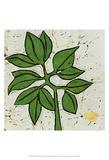 Planta Green IX Prints by Andrea Davis