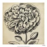 Graphic Floral V Giclée-Druck von  Vision Studio