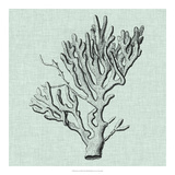 Serene Coral III Giclee Print by  Vision Studio
