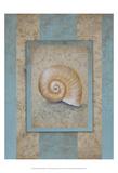Shell & Damask Stripe I Poster by Rita Broughton