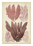 Seaweed Specimen in Coral IV Giclee Print by  Vision Studio