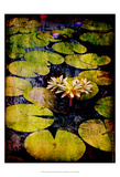 Lily Ponds IX Prints by Robert Mcclintock