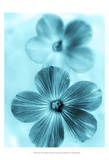 Forget Me Not Blue I Poster