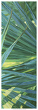 Fan Palm II Giclee Print by Suzanne Wilkins