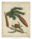 Antique Conifers III Giclee Print by Henry Fletcher
