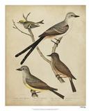 Bonapart Birds II Giclee Print by Charles L. Bonapart