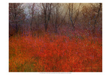 Red Grass I Posters by Chris Vest