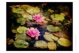 Lily Ponds I Print by Robert Mcclintock