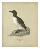 Antique Penguin II Wydruk giclee autor Von Wright